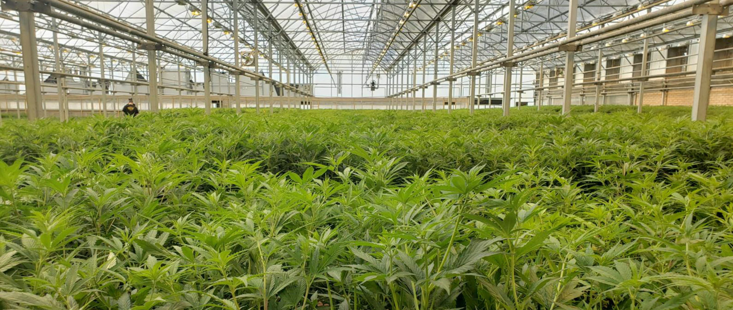 CBD Made in New Mexico: Rich Global Hemp (RGH) Coming to Mesilla