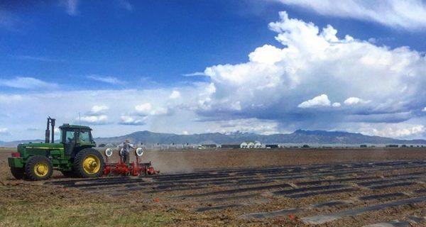First Crop Hemp New Mexico