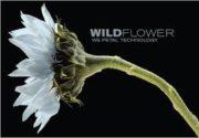 wildflower-it-logo-e1535655789645